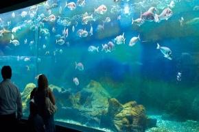 cretaquarium turtle water park heraklion crete